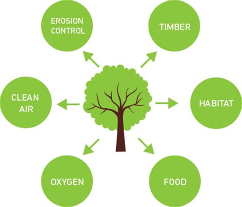 Conservation of Forest and Wild Life Essay Resource